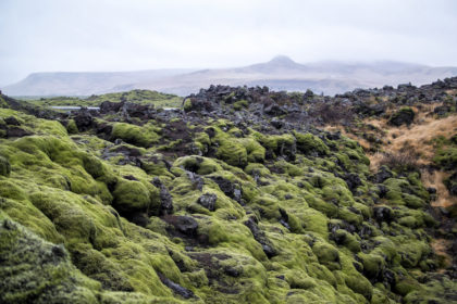 moss-covered lava field