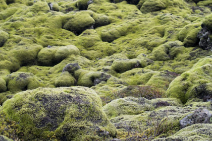 moss-covered lava field (dating back to the 700s)