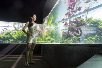 "temporary exhibit (""Underwater Forests"") at the Lisbon Oceanarium"